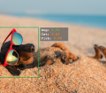 Image Analytics IDing a dog on the beach