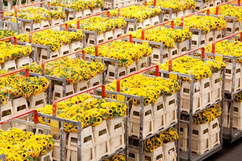 Solving the biggest logistics puzzle in the floral industry