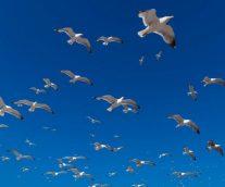 새들에게서 비행을 배우면 어떨까?