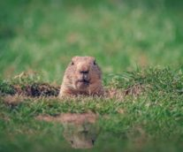 Groundhog Day for Consumer Packaged Goods Companies