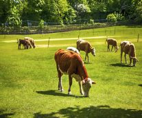 How Now Brown Cow – Sensors and Analytics Take a (Farmer's) Field Trip