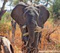 elephant-feature