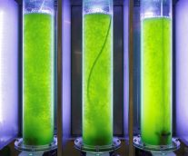Is Sustainable Biofuel the Future of Aviation?