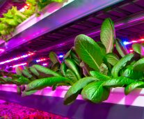 Agritecture: the next agricultural revolution?