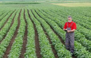 Farmer or agronomist in soy bean field with tablet