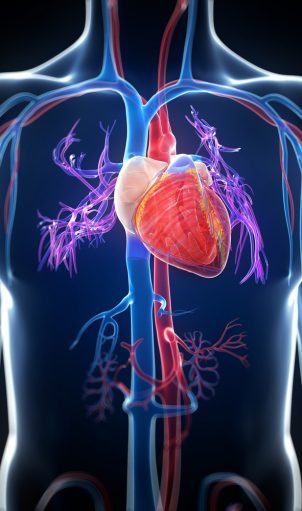 The Living Heart: Revolutionizing Human Health